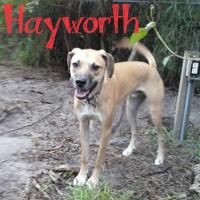 Hayworth2