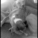 Pet Adoption: How to Save Money Adopting a Family Pet